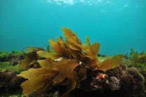Algen Meer