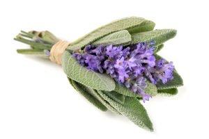 strauss salbei lavendel