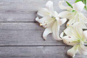 Die Lilie bereichert alle Parfums um eine sinnliche Note.